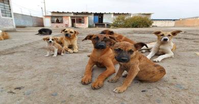 Tottus realiza campaña en favor de albergue para perros sin hogar